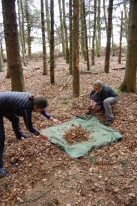 Using a tarp to collect leaf litter for the shelters
