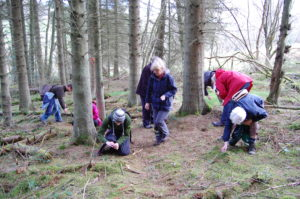 north wales foraging course