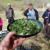 Spring foraging course in North Wales