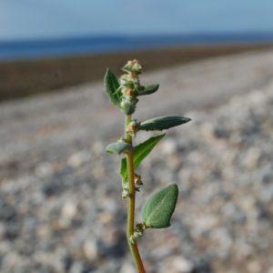 coastal foraging course