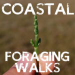 coastal foraging course uk