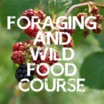 foraging course in the uk
