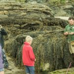 beach foraging north wales