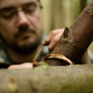 bushcraft spruce root