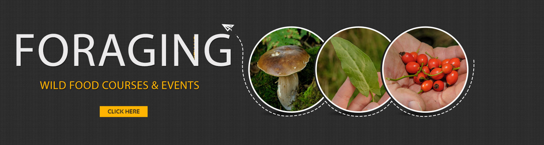 foraging wild food walks uk