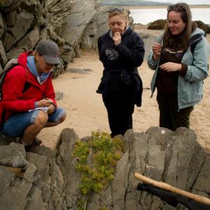 beach foraging