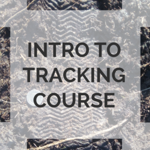 introduction to Tracking course