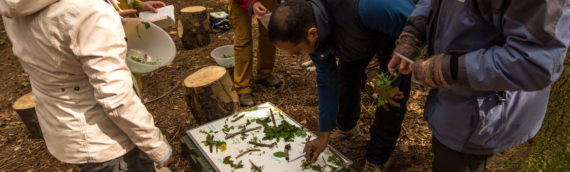 Certificated Foraging Courses in North Wales