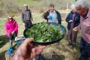 foraging course in north wales