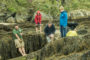 beach foraging course north wales