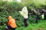 foraging ban bristol