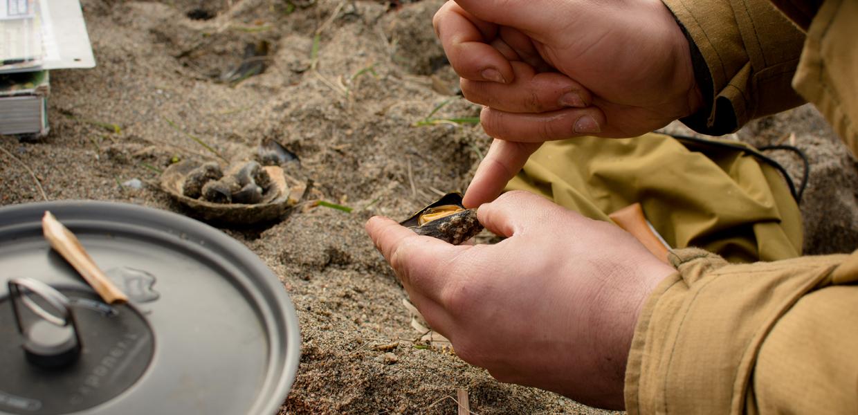 beach foraging uk