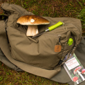 boletus edulis foraging