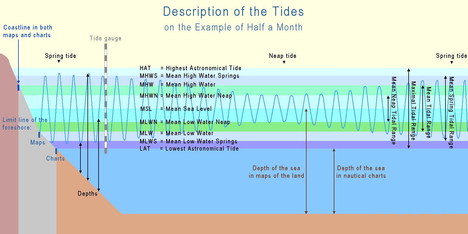spring tide foraging course uk