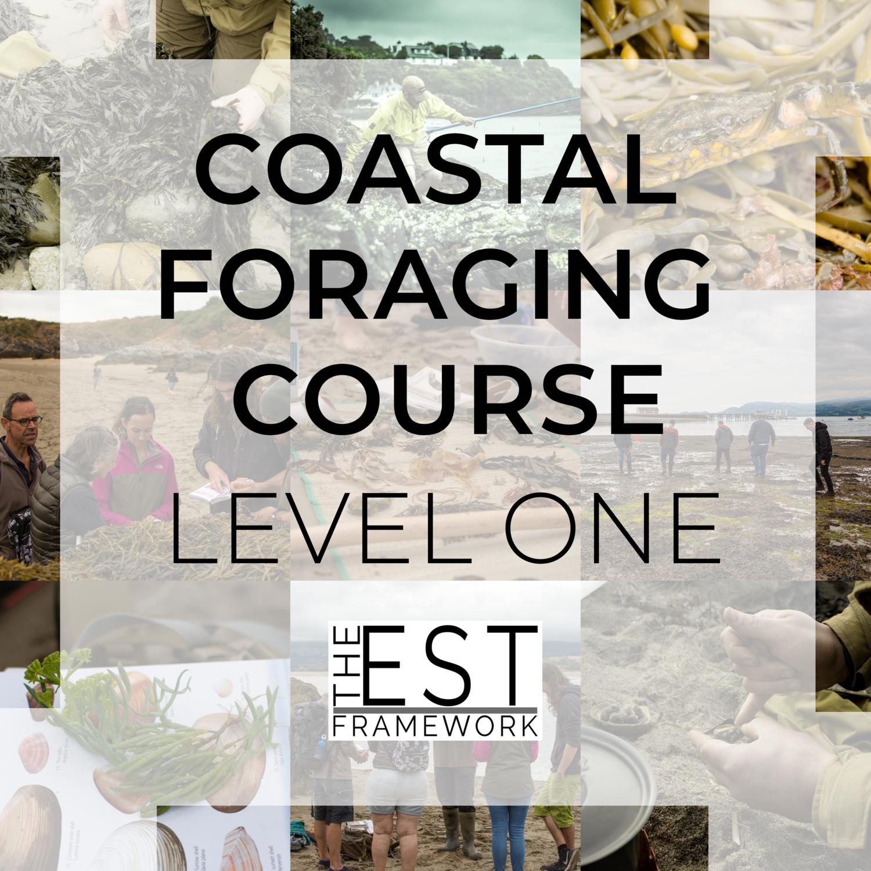 coastal foraging course wales