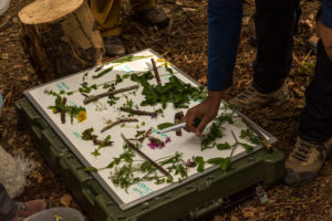 certificated foraging training