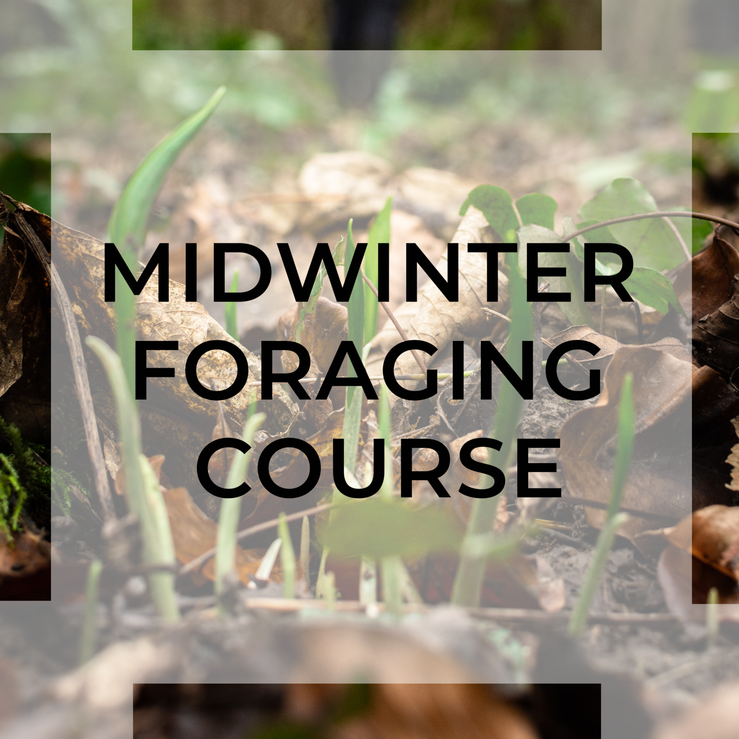 winter foraging course uk